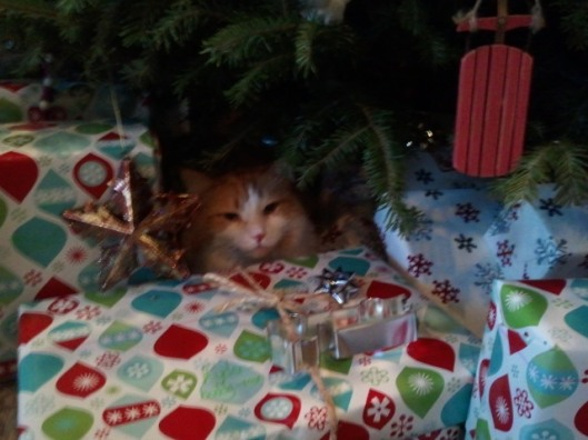 My kitty under the tree