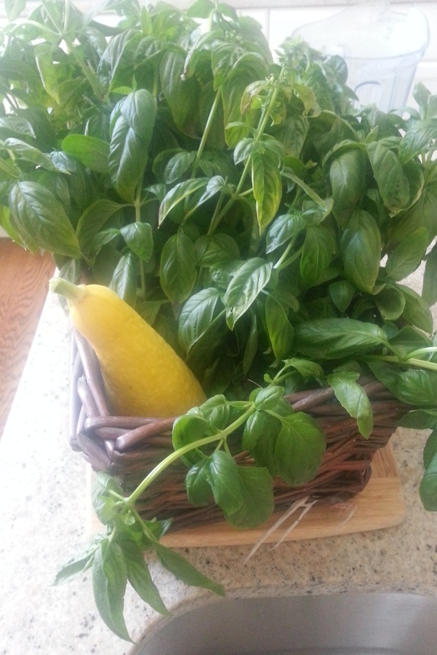 Sweet basil from my garden