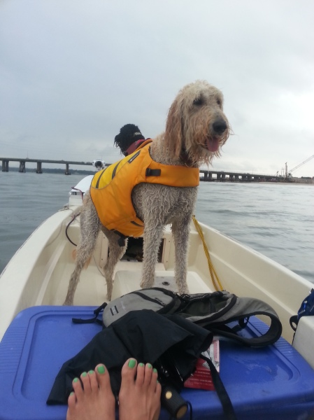 doggy life vests
