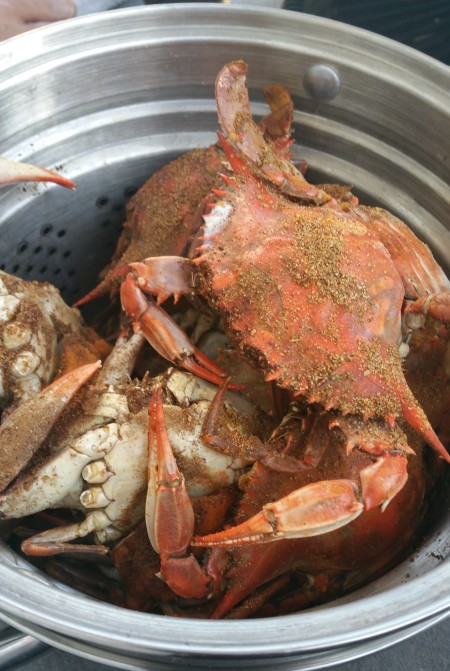 blue crabs caught in Lynnhaven Inlet